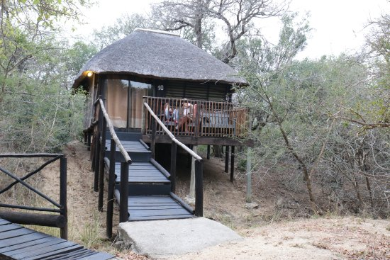 Marc's Treehouse Lodge: A more civilized treehouse suite for 4