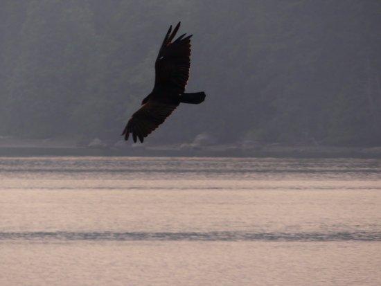 Sechelt, Canadá: Tolles Ambiente