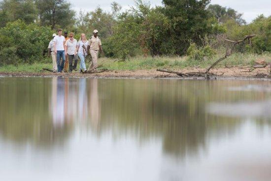 Timbavati Private Nature Reserve Imagem