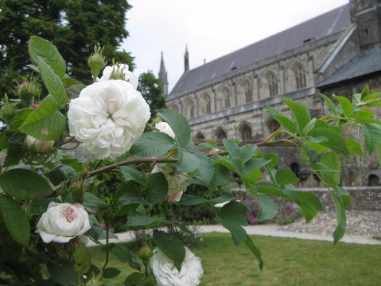 Winchester, UK: A view of Winchester Cathedral from Dean Garnier Garden