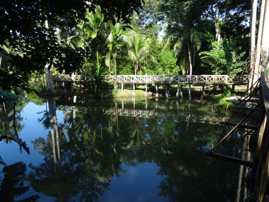 Sepilok Jungle Resort: Gardens in the Jungle Resort