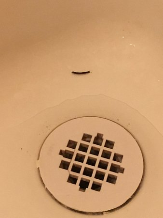 Diamond Point, Estado de Nueva York: bug in shower