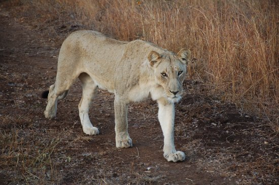 Mkuze, South Africa: First early morning sighting