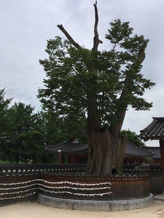 Suwon, Corea del Sud: photo2.jpg