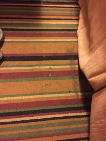Portland Travelodge: Carpet beside bed