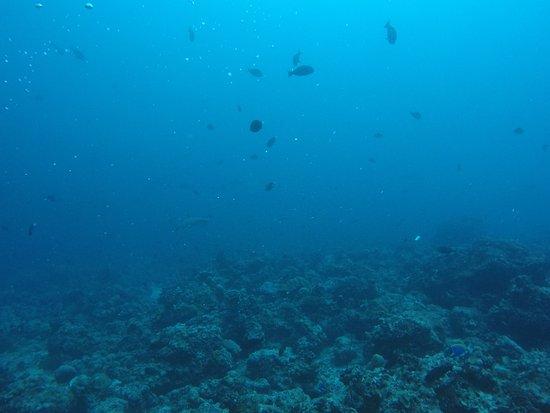 Maafushi Island: Excellent visibility