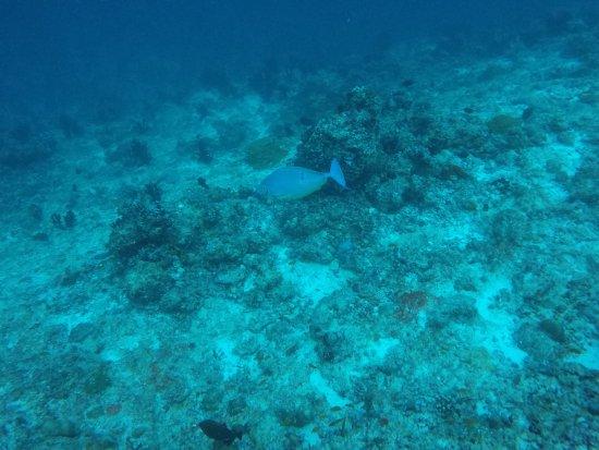 Maafushi Island: Great variety of fish