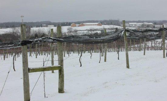 """ลอว์เรนซ์เบิร์ก, เคนตั๊กกี้: We are open year round, even when the grapes are """"sleeping""""!"""