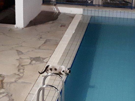 Eleni Holiday Village: 20170807_215016_large.jpg