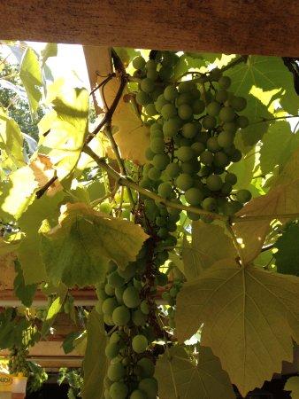 Gussing, Østerrike: Romantik pur: Speisen unter der Weinlaube