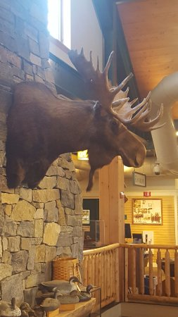 Freeport, ME: Moose