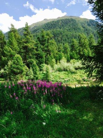 Samedan, Svizzera: Umgebung