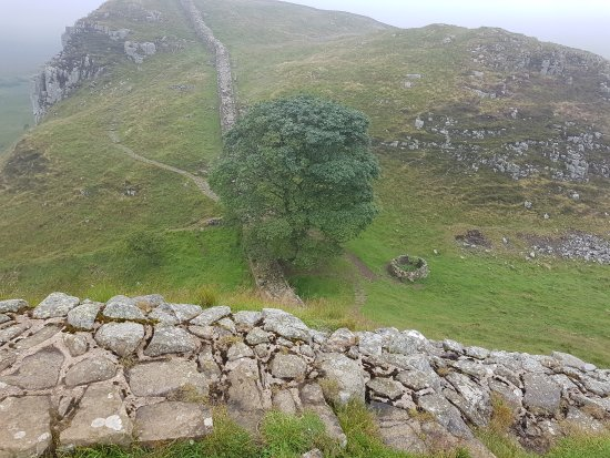 Northumberland National Park, UK: Sycamore Gap