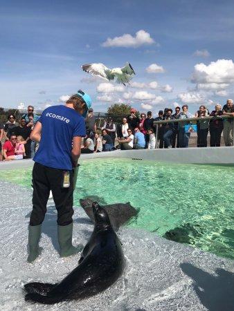 De Koog, Hollanda: krmení tuleňů