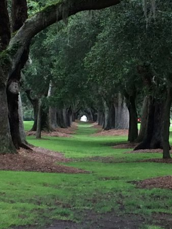 Saint Simons Island, GA: Tunnel of Trees at the Golf Course