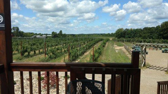 Geneva, Огайо: Vineyard