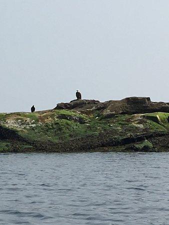 Kayaking Gulf Islands: photo1.jpg