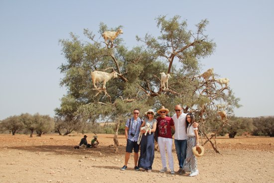 Go 4 Marrakech Private Tours