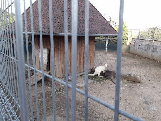 Biskoupky, Češka Republika: Klokani