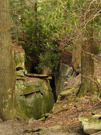 Bruceton Mills, Virgínia Ocidental: Picture taken at Coopers Rock along the Rattlesnake Trail.