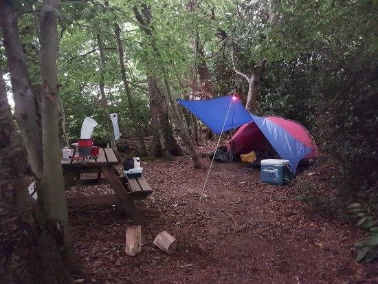 High Wycombe, UK: Perfect woodland hideaway!
