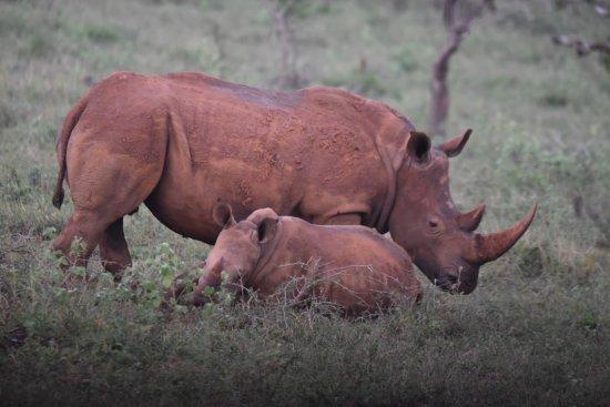 Heritage Day Tours & Safaris: White Rhinos.