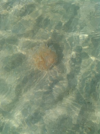 Morehead City, NC: jellyfish? on sand dollar island. We didn't touch!