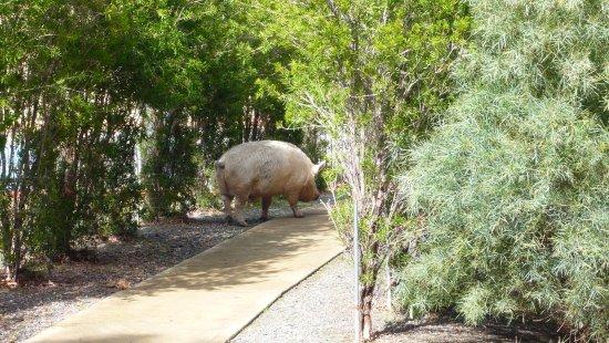 Byford, Australia: encounters-1