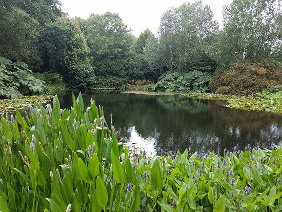 Great Torrington, UK: Lake