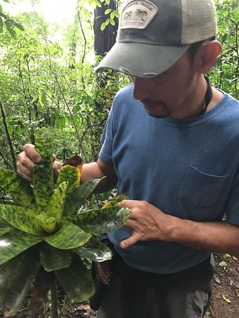 Adventours Costa Rica : Looking for frogs