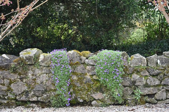 Cooperage : The car park wall flowers