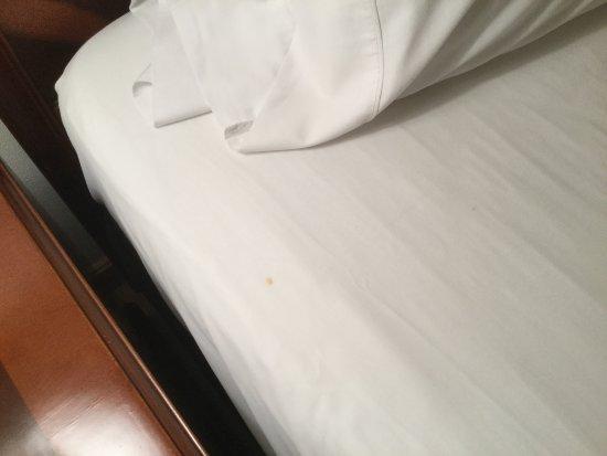 Hotel Poblado Plaza: Clean bed sheets?