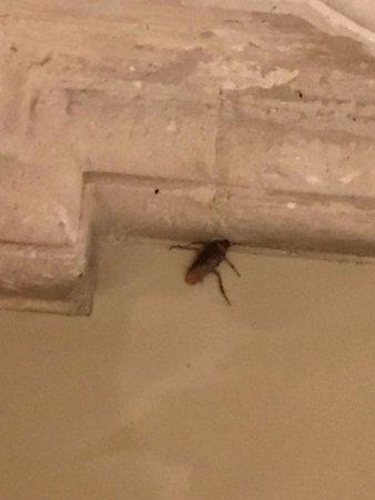 Jerez de García Salinas, México: Cockroaches jumbo-sized in the presidential bathroom