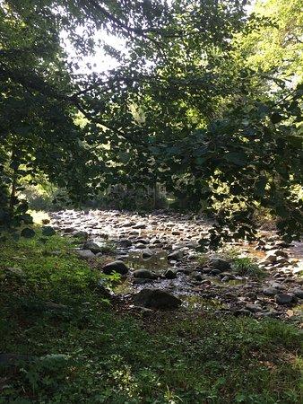 Valea Draganului, Románia: Pensiunea Andreea