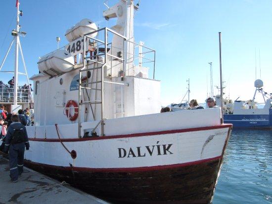 Dalvik, Iceland: Whale watching ship