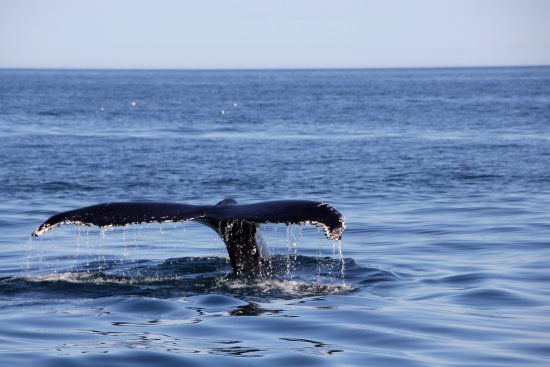 Dalvik, Iceland: Humpback Whale