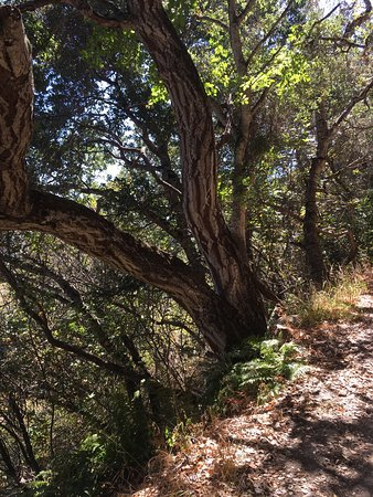 Carmel Valley, Kalifornien: photo0.jpg