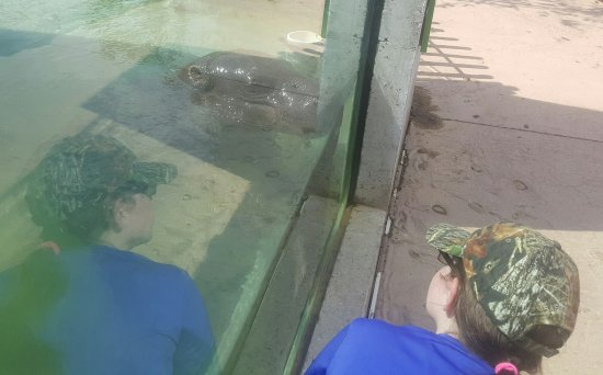 Pittsburgh Zoo & PPG Aquarium: 20170615_172304_large.jpg