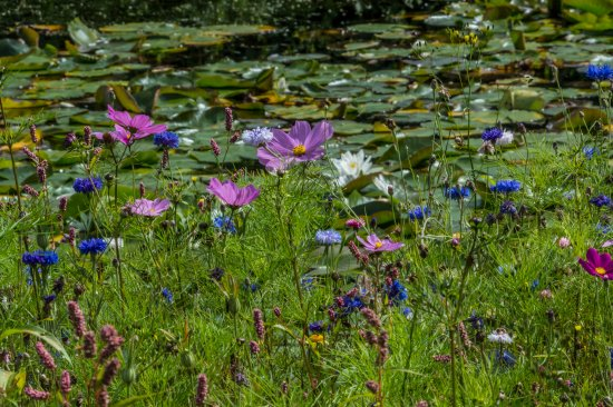 Gresgarth Hall Gardens: Wild flower meadow alongside the lake