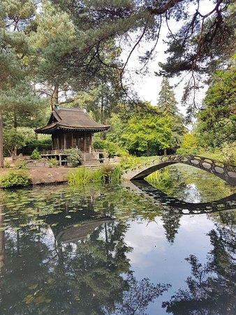 Knutsford, UK: IMG-20170813-WA0088_large.jpg