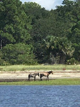 Fernandina Beach, FL: Wild horses on the beach at Cumberland Island.