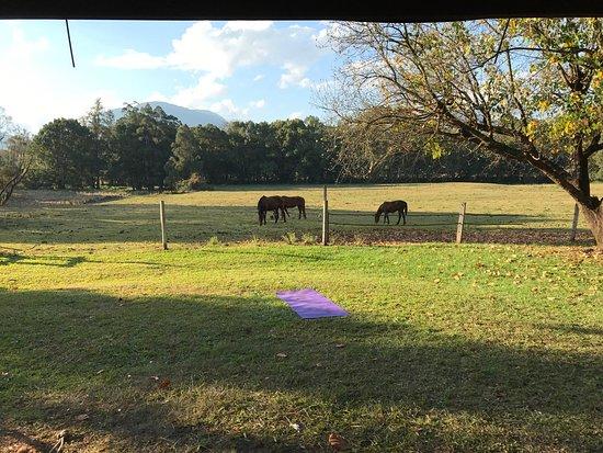 Nimbin, أستراليا: photo0.jpg