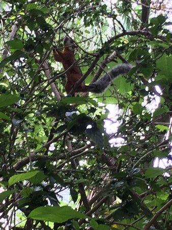 Playa Grande, Costa Rica: Colorful squirrel.