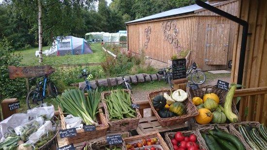 The Tea Garden at Comrie Croft: Fresh vegetables next to Comrie Croft Bikes.