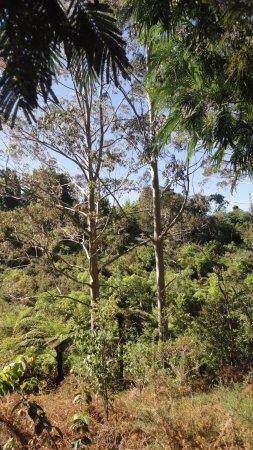 Kerikeri, Selandia Baru: Виды вдоль  Hongi Hika Walk