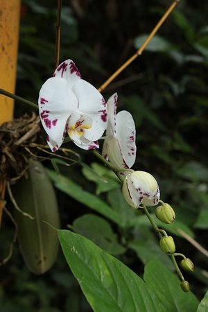 Papaikou, Hawái: We saw at least 30 different kinds of orchids