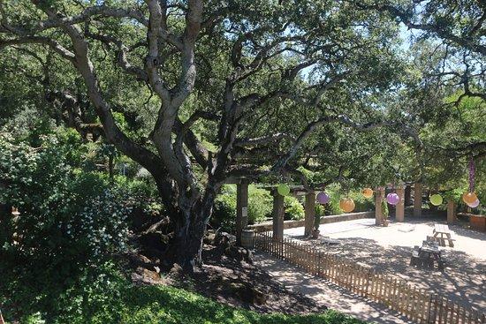 Matanzas Creek Winery: Tranquil Setting