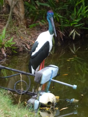 Palm Cove, Australia: Wildlife in the grounds