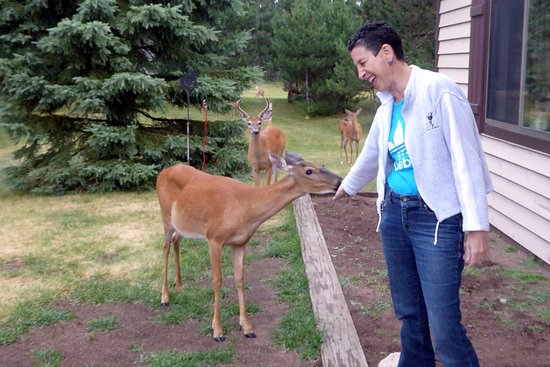 """Boulder Junction, WI: Known as the """"Townies"""", these resident deer are VERY friendly!"""
