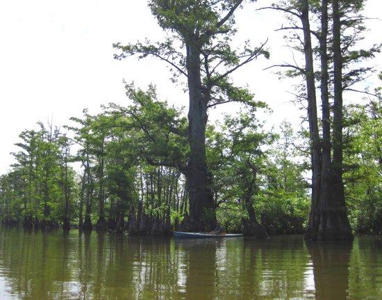 White Crane Canoe Rentals & Guide Service: cache river
